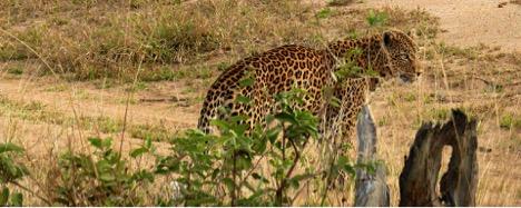 mwalimu nyerere national park